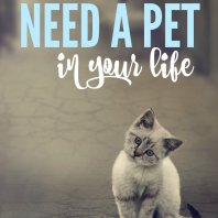 These are the 4 reasons you need a pet in your life!